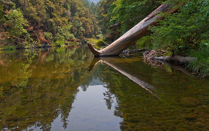 Angelo Coast Range Reserve 2