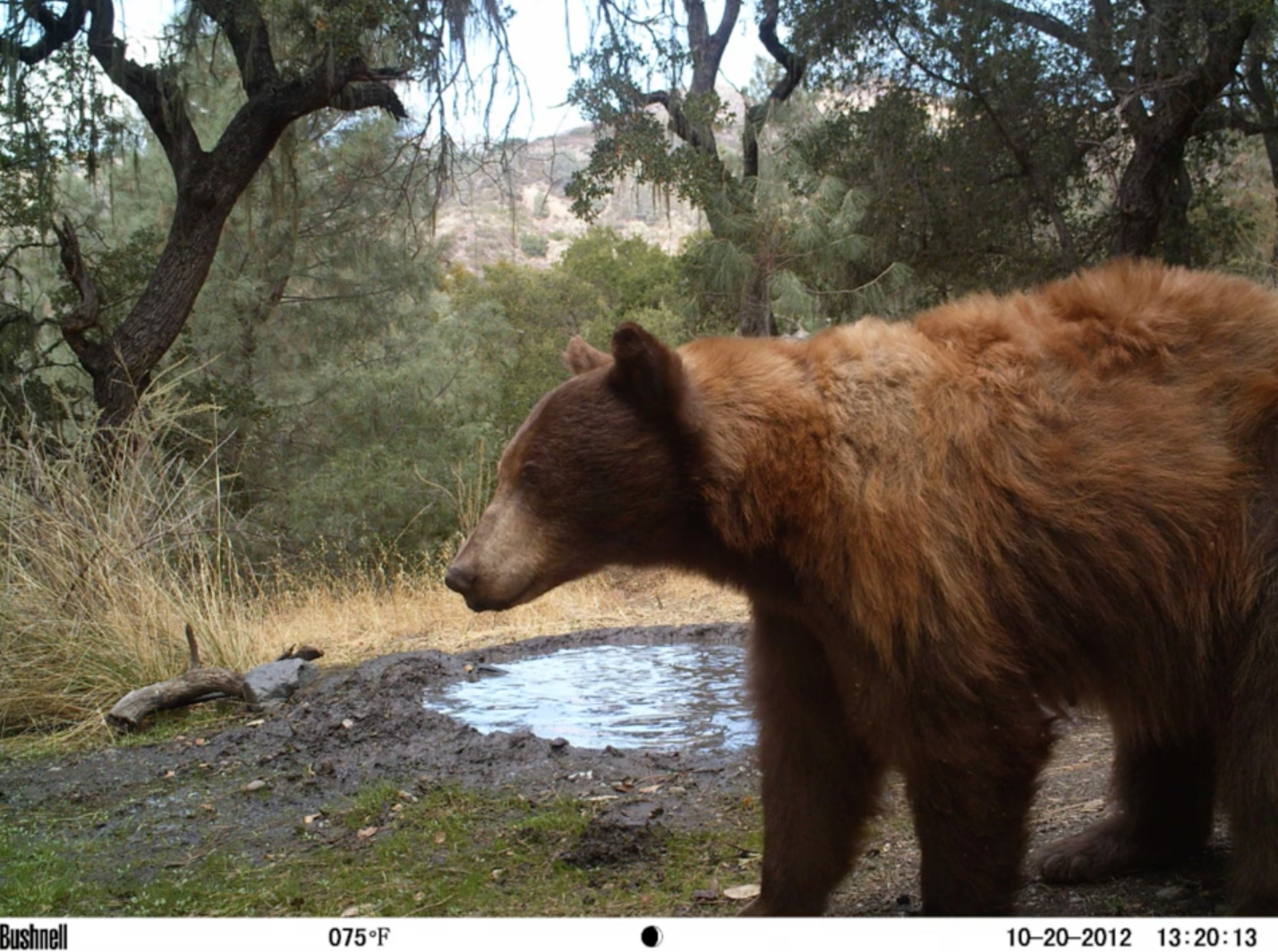 camera trap analysis