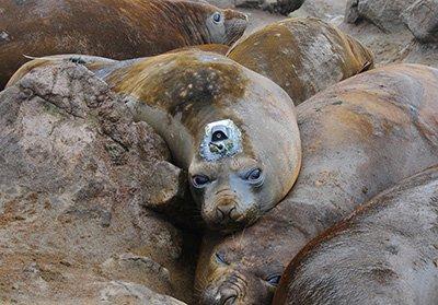 marine animal movements