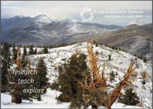 White Mountain postcard