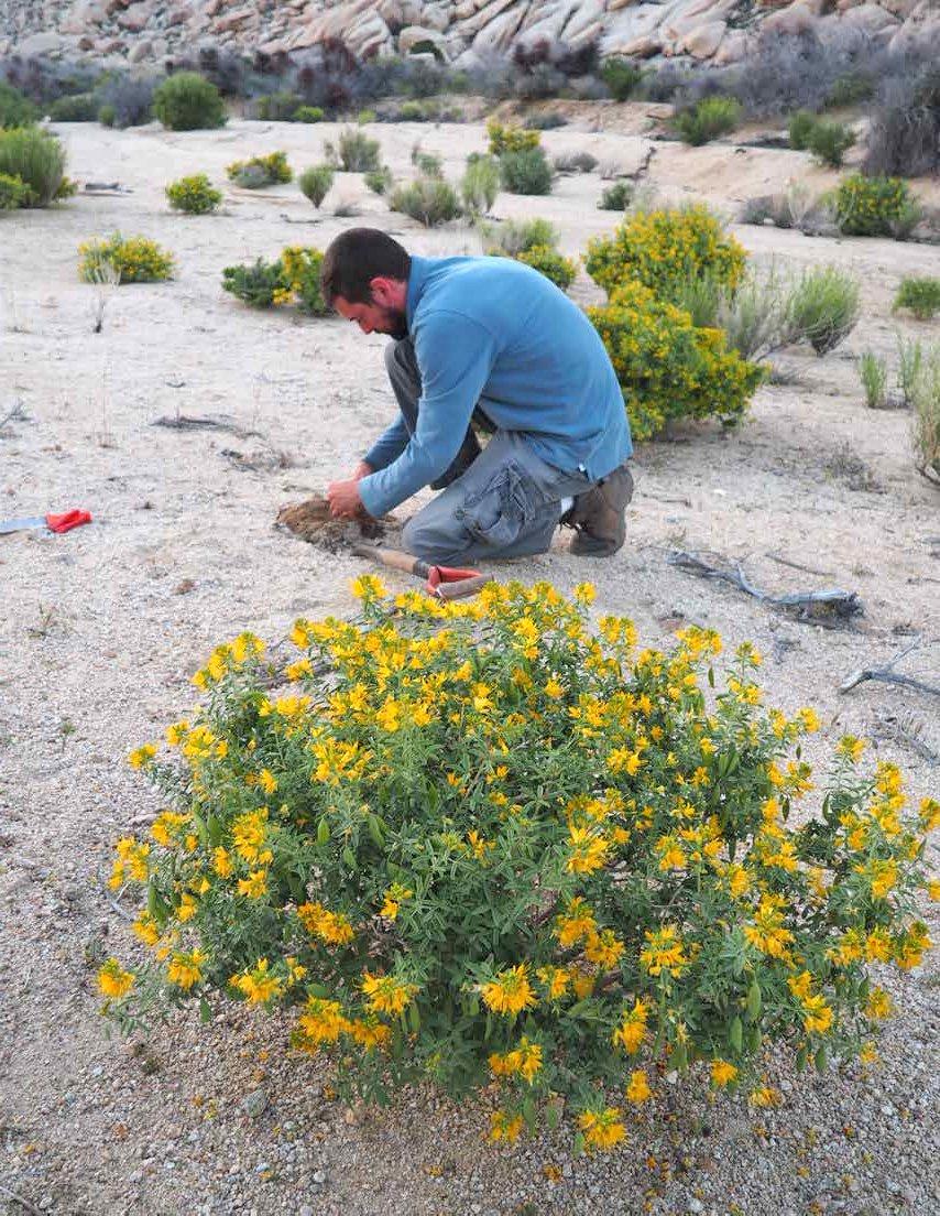 Granite Mountains plants at UC Botanical Garden 1
