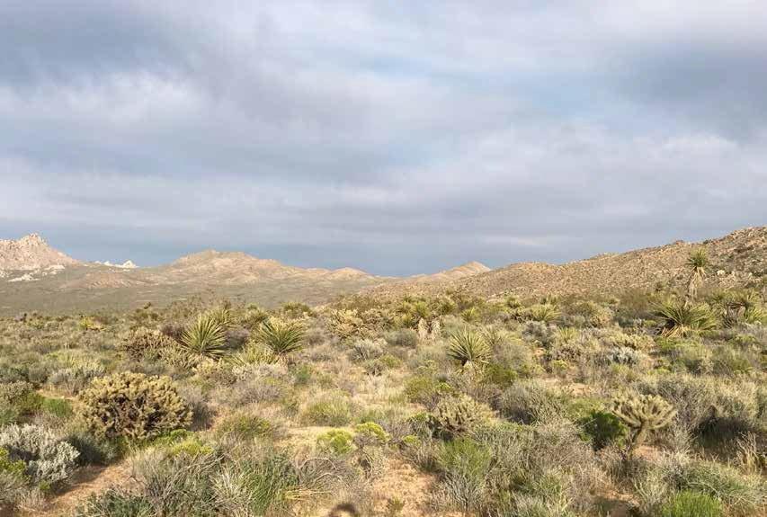 Granite Mountains plants at UC Botanical Garden 2