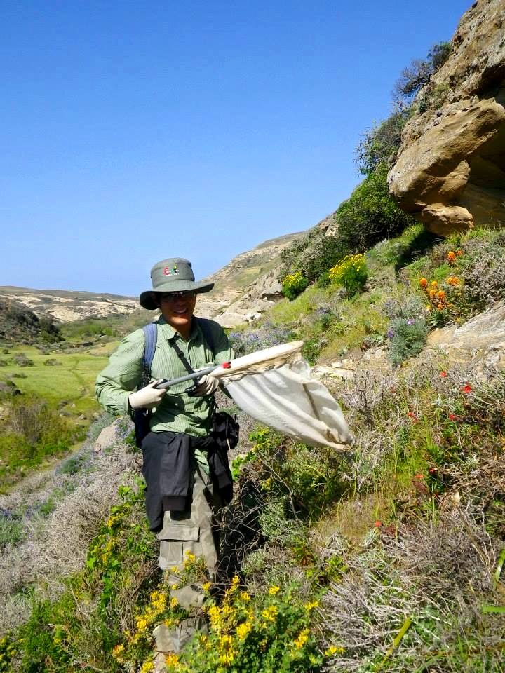 James Hung carrying a butterfly net amid wildflowers on a canyon slope in Southern California