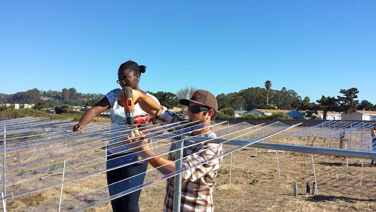 A young woman and a young man strap clear plastic slats to the framework of posts erected around each drought plot at Younger Lagoon.