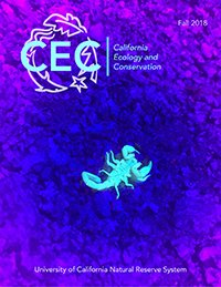 Borrego sand scorpion fluorescing greenish blue against a rock background bathed in purple/blue rays from a black light.