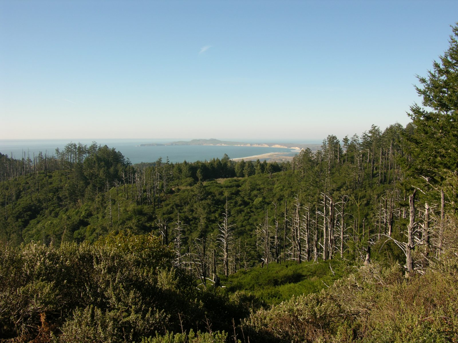 Lassen Point Reyes