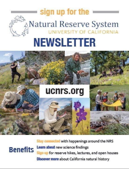 Newsletter flyer