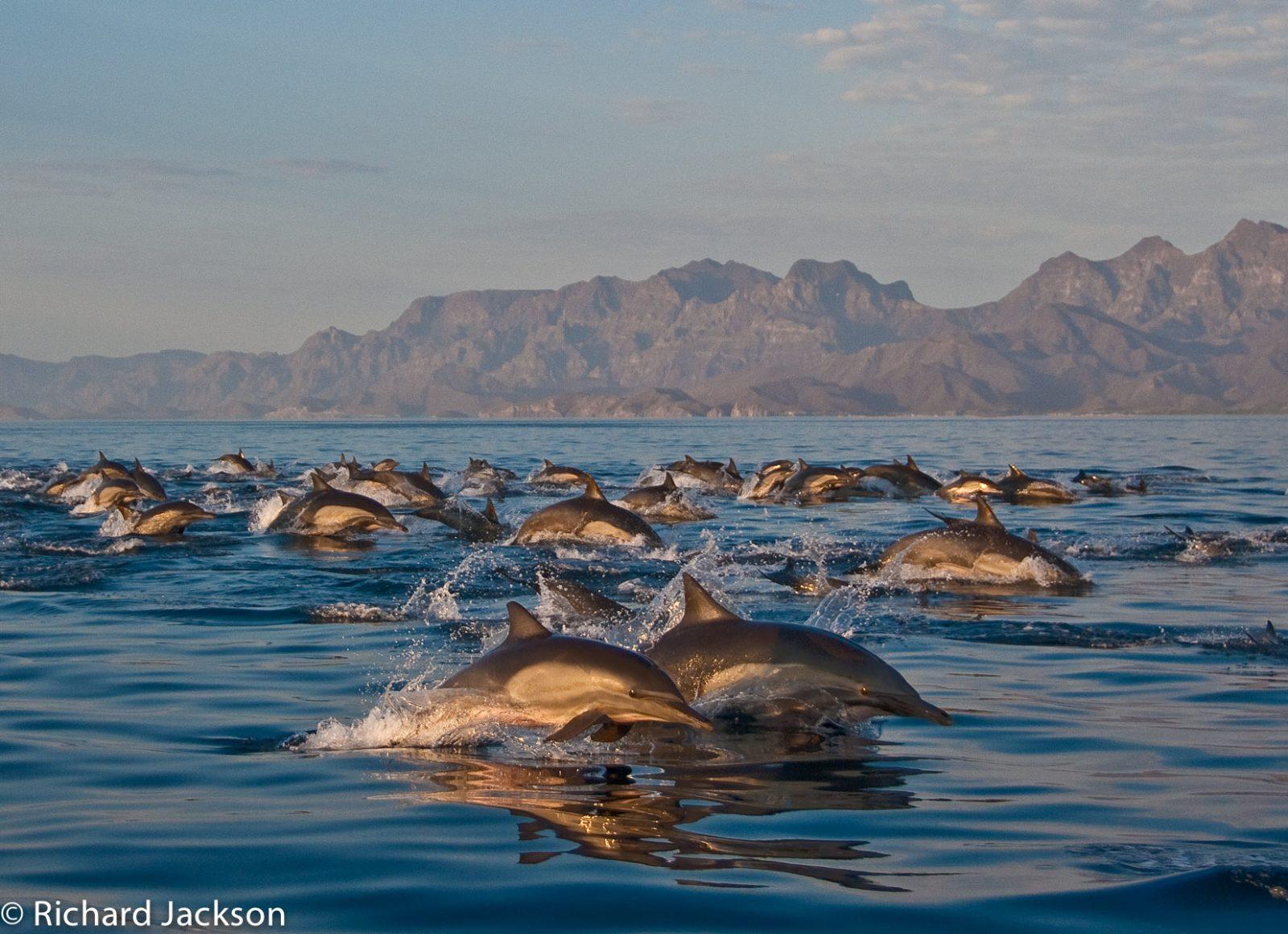 UC Natural Reserve System gains sister reserve in Baja California Sur 8