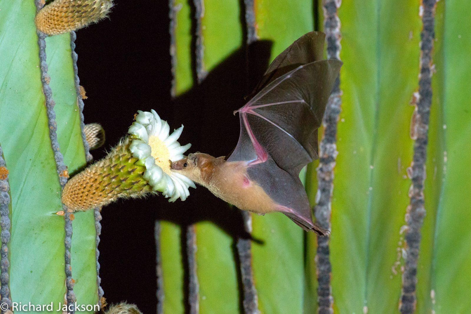 UC Natural Reserve System gains sister reserve in Baja California Sur 10