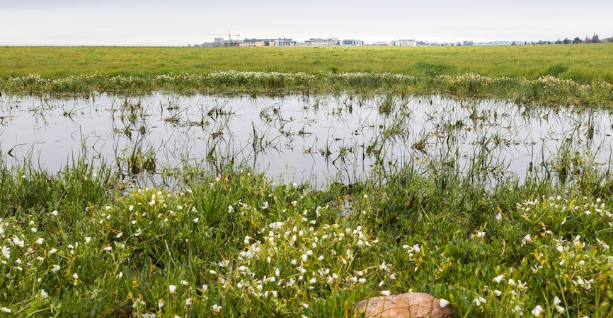 Field station planned for UC Merced's Vernal Pools and Grassland Reserve 8