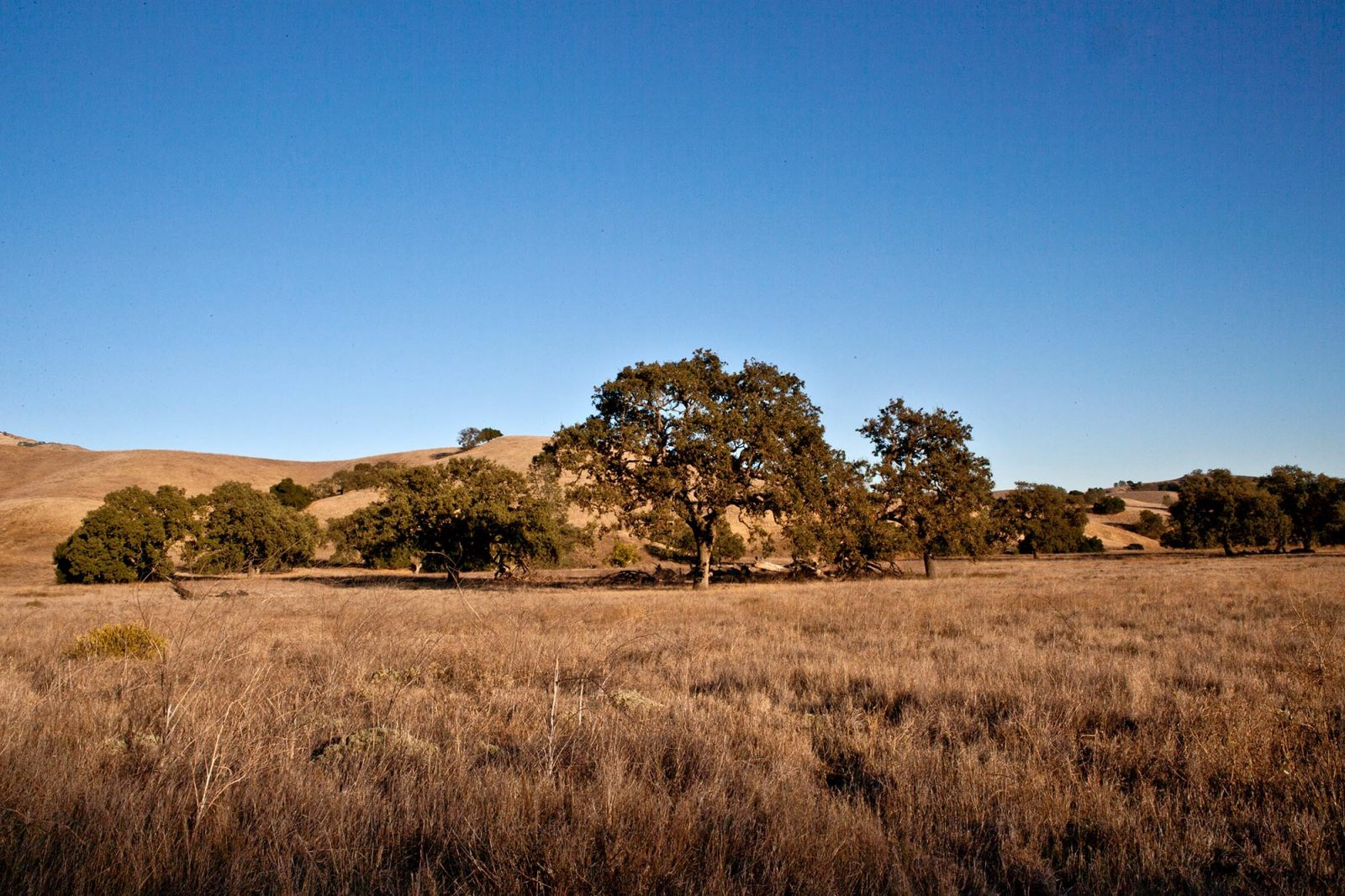 Sedgwick Reserve
