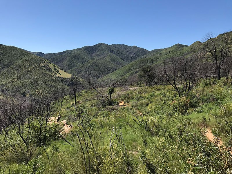 Stebbins Cold Canyon Reserve