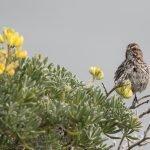 California Biodiversity Network