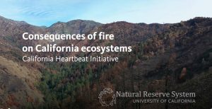 Consequences of fire on California ecosystems