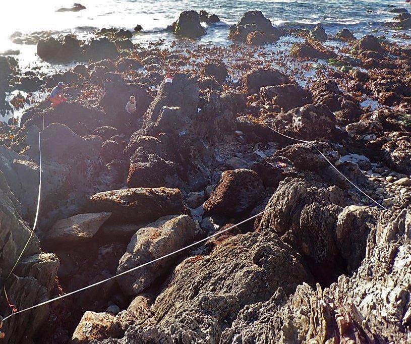 black abalone rescue