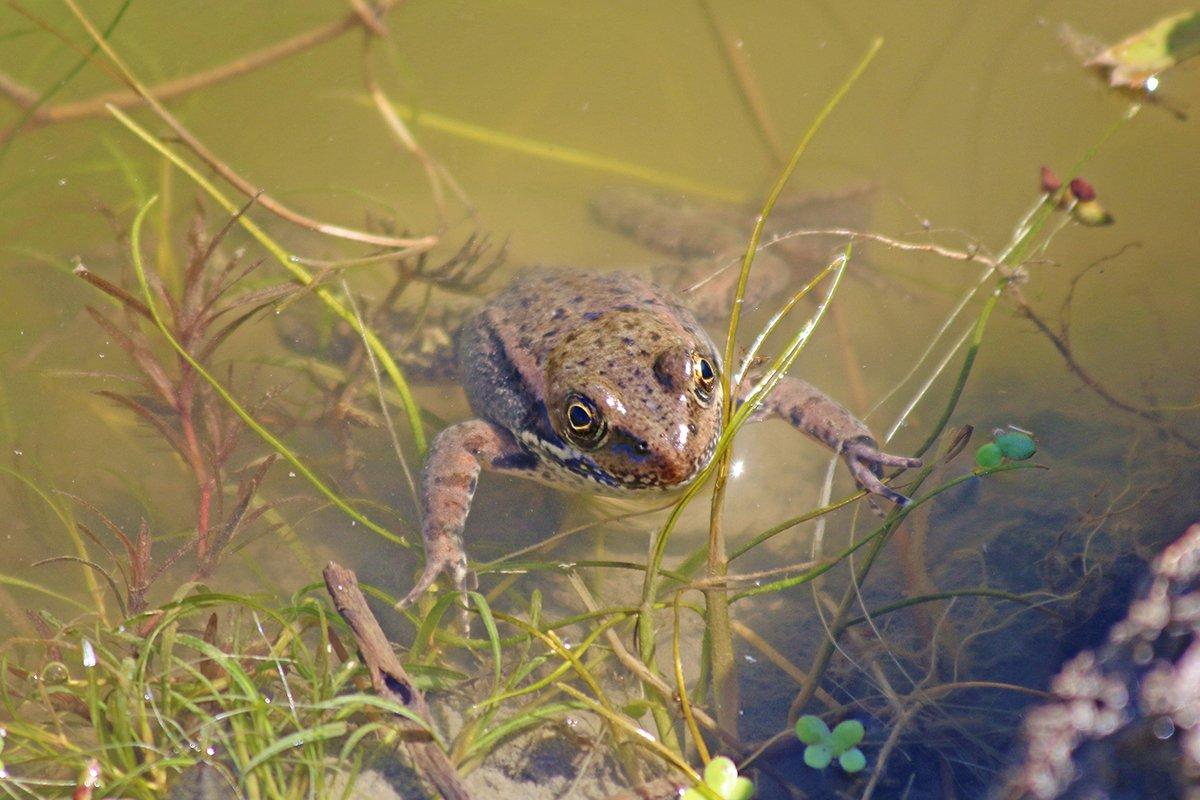 wetland welcome mat