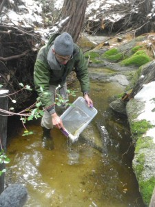 Tadpole Release to Bolster Endangered Population 2
