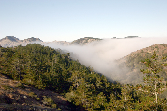 fog enters a valley at Santa Cruz Island Reserve