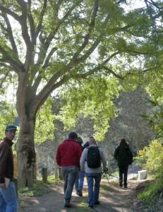Parc trees
