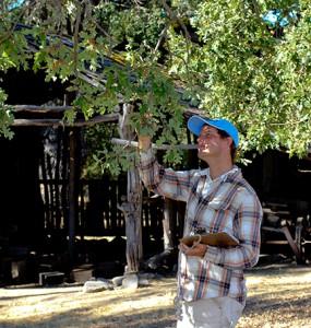 Cornell University researcher Ian Pearce studies oak biology at Hastings.