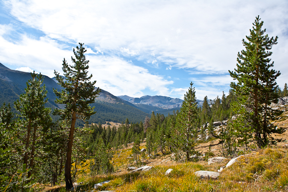 Student research into factors controlling conifer seedling survival will help scientists understand how trees weather environmental conditions in the Sierra. Image credit: Lobsang Wangdu