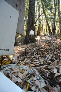 A forested hill dubbed Rivendell has been outfitted with groundwater wells, sap sensors, rain gauges, sensor-filled boreholes, wireless network motes, and other instruments in a multidisciplinary effort to study the water cycle at Angelo Coast Range Reserve. Image credit: Anna Davison