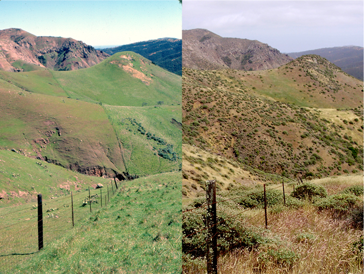 Native vegetation on Santa Cruz Island has rebounded since grazers were removed nearly three decades ago. Hillsides covered almost entirely in grasses in 1980 (left) are now dotted with coyote brush and other shrubs in 2012 (right).  Image credits: Dirk Van Vuren (left); Beltran et al. (right)