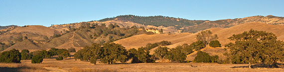 Sedgwick Reserve protects oak savanna in the rolling hills of the Santa Ynez Valley. Image credit: Lobsang Wangdu
