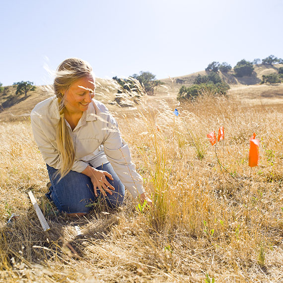 Sedgwick Reserve attracs researchers interested in California ecology and biodiversity. ©2014 University of California