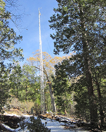 Tall instrumented tower in a conifer forest.
