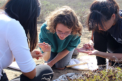 Three students kneel on the ground to sort through bugs on their palms using fine brushes; butterfly net in background.