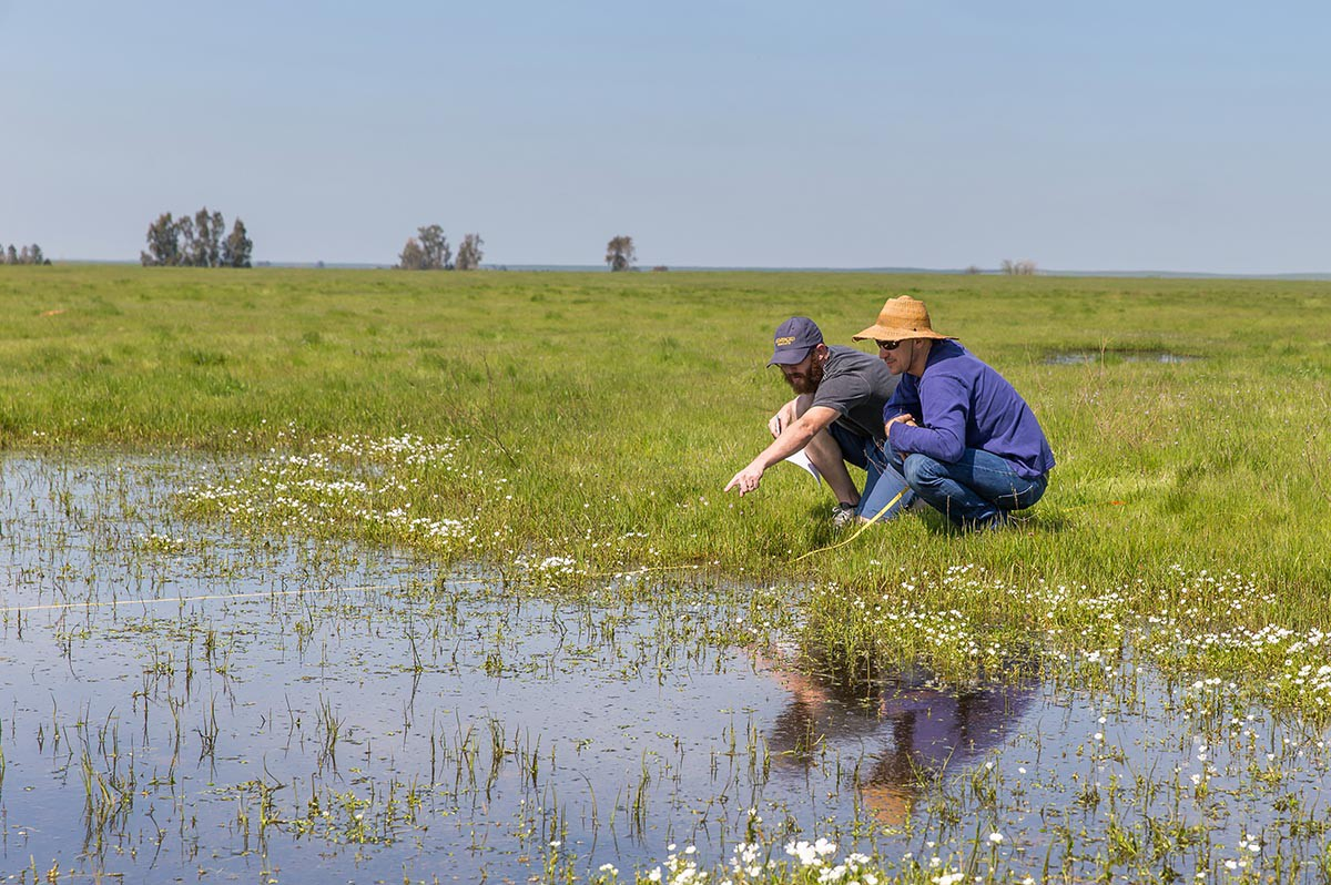 Merced Vernal Pools and Grassland Reserve in spring. Image credit: Clayton Anderson