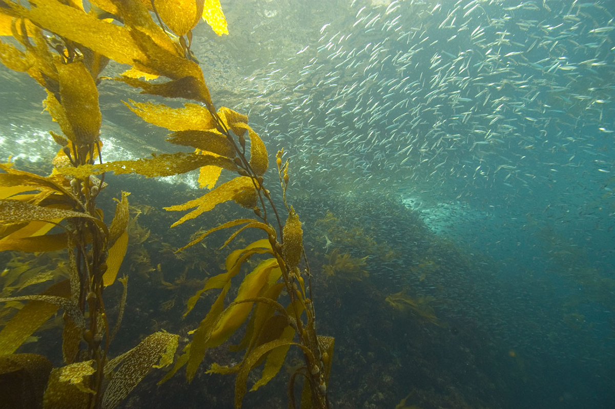 Channel Islands MPAs